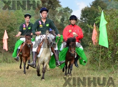 广西百色市德保县吉星岩旅游风景区推出的矮马